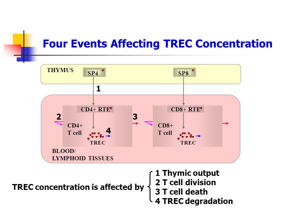Four Events Affecting TREC Concentration