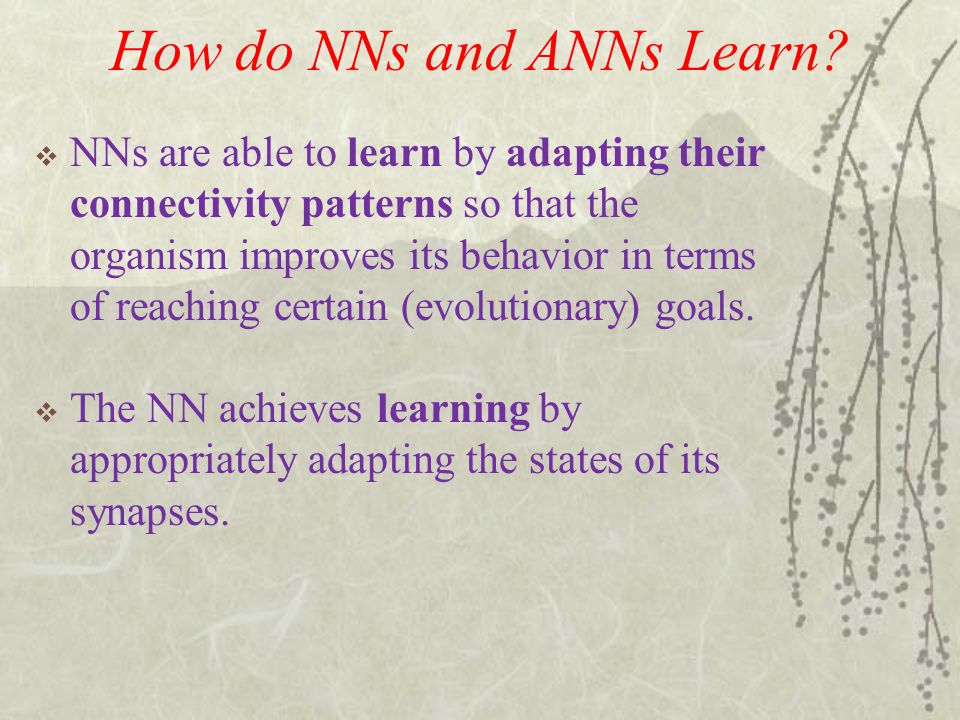How do NNs and ANNs Learn