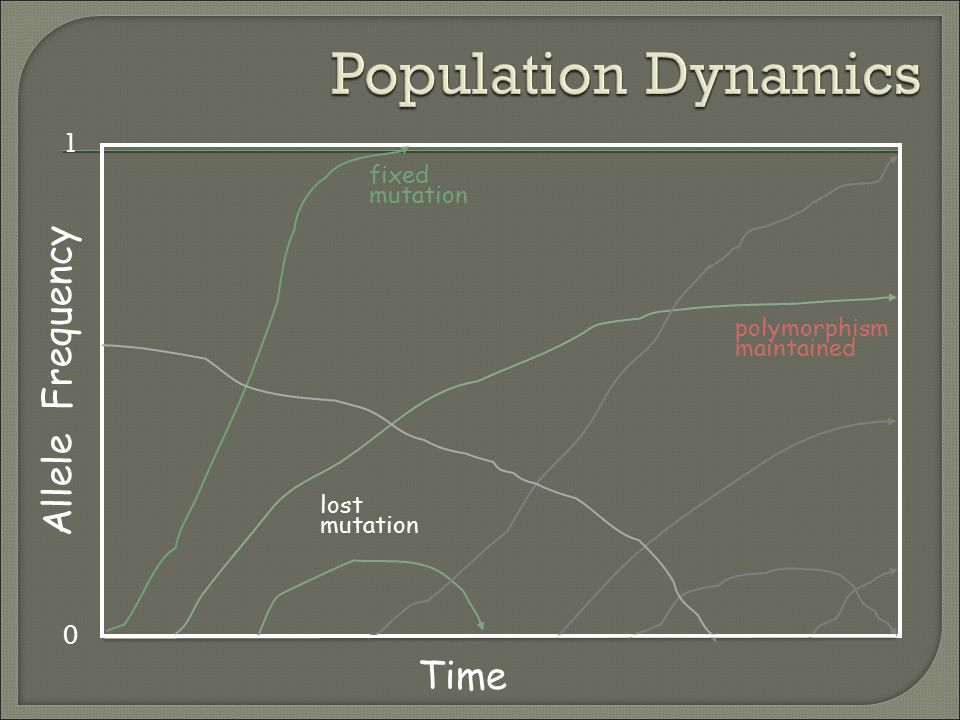 Population Dynamics Allele Frequency Time 1 fixed mutation