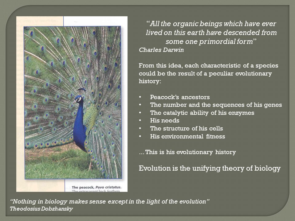 Evolution is the unifying theory of biology