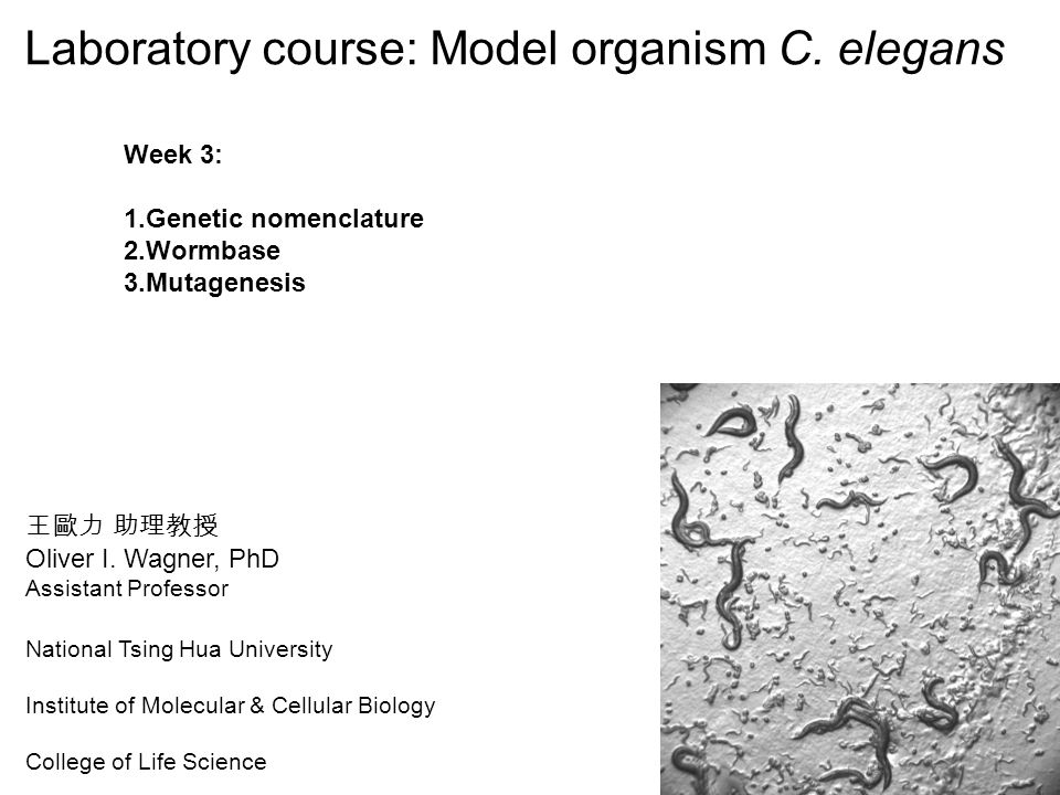 Laboratory course: Model organism C. elegans