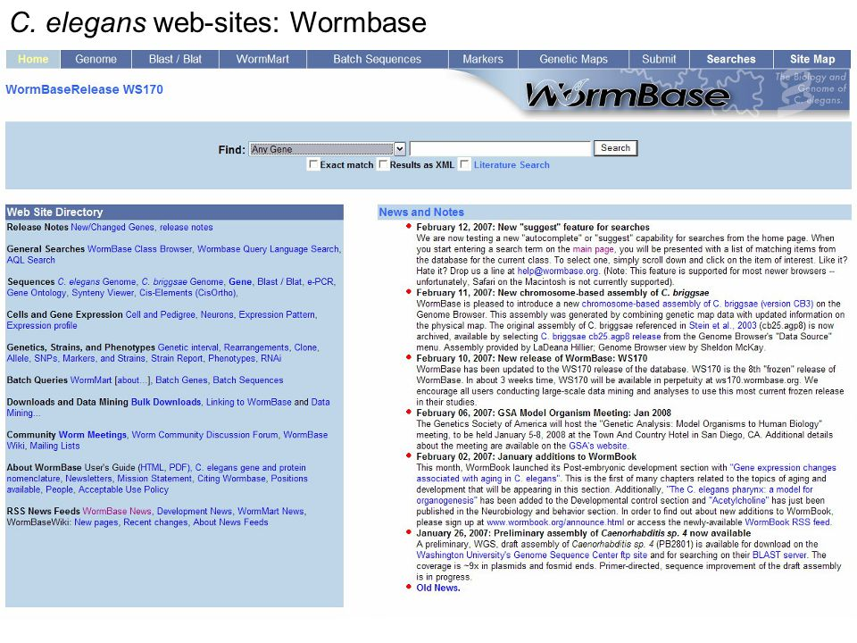 C. elegans web-sites: Wormbase
