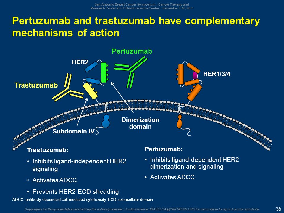 Pertuzumab and trastuzumab have complementary mechanisms of action