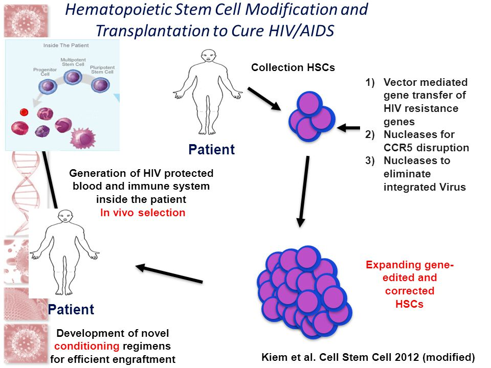 Hematopoietic Stem Cell Modification and