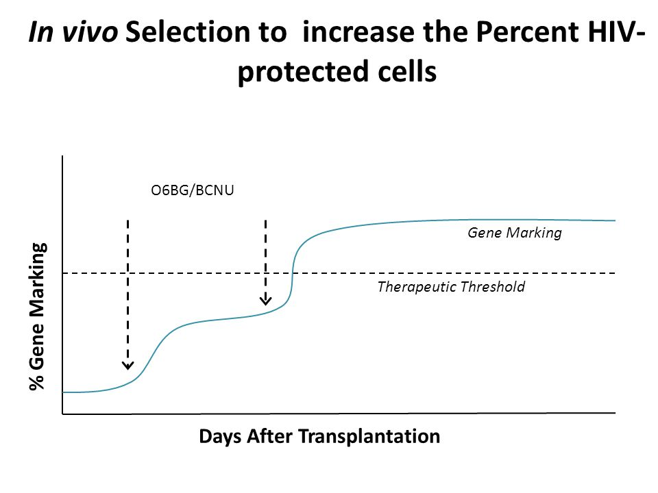 In vivo Selection to increase the Percent HIV-protected cells