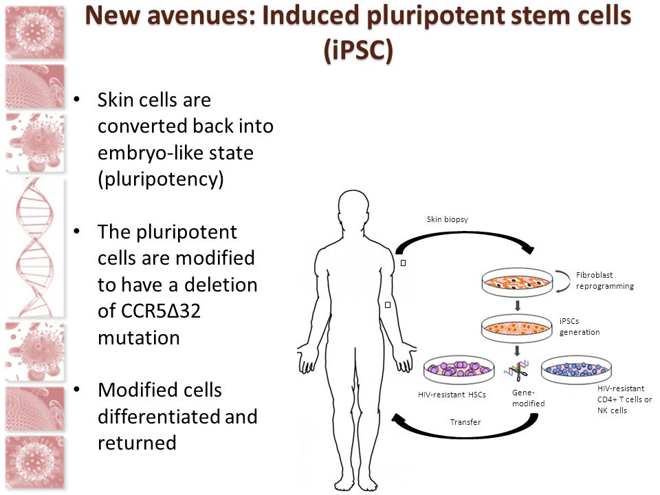 New avenues: Induced pluripotent stem cells (iPSC)
