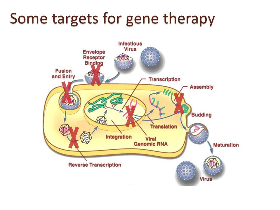 Some targets for gene therapy