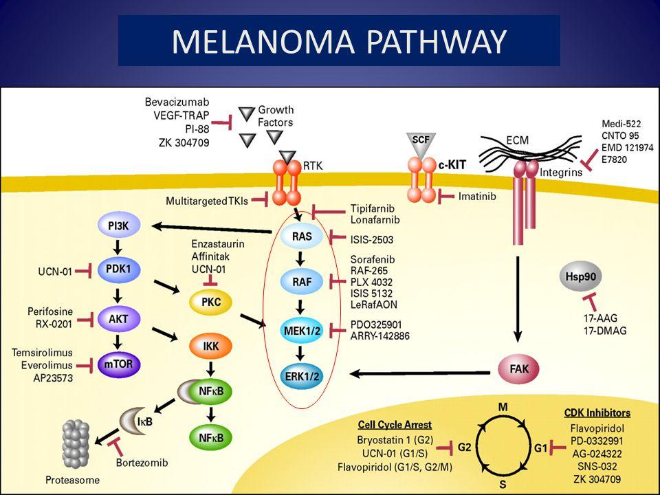 MOLECULAR TARGETS MELANOMA PATHWAY