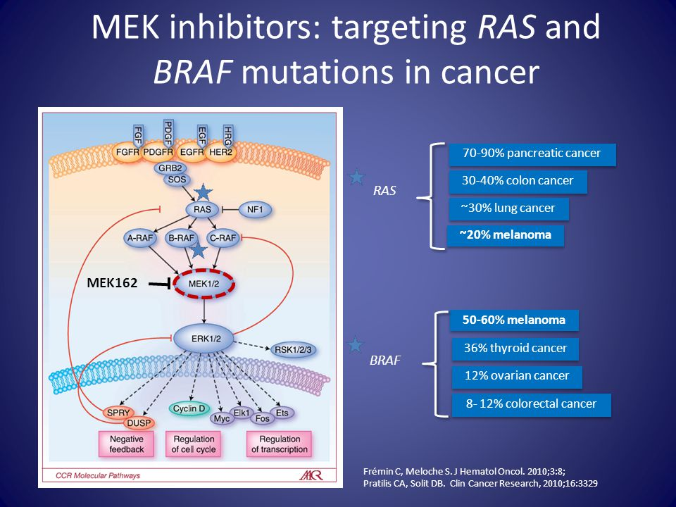 MEK inhibitors: targeting RAS and BRAF mutations in cancer