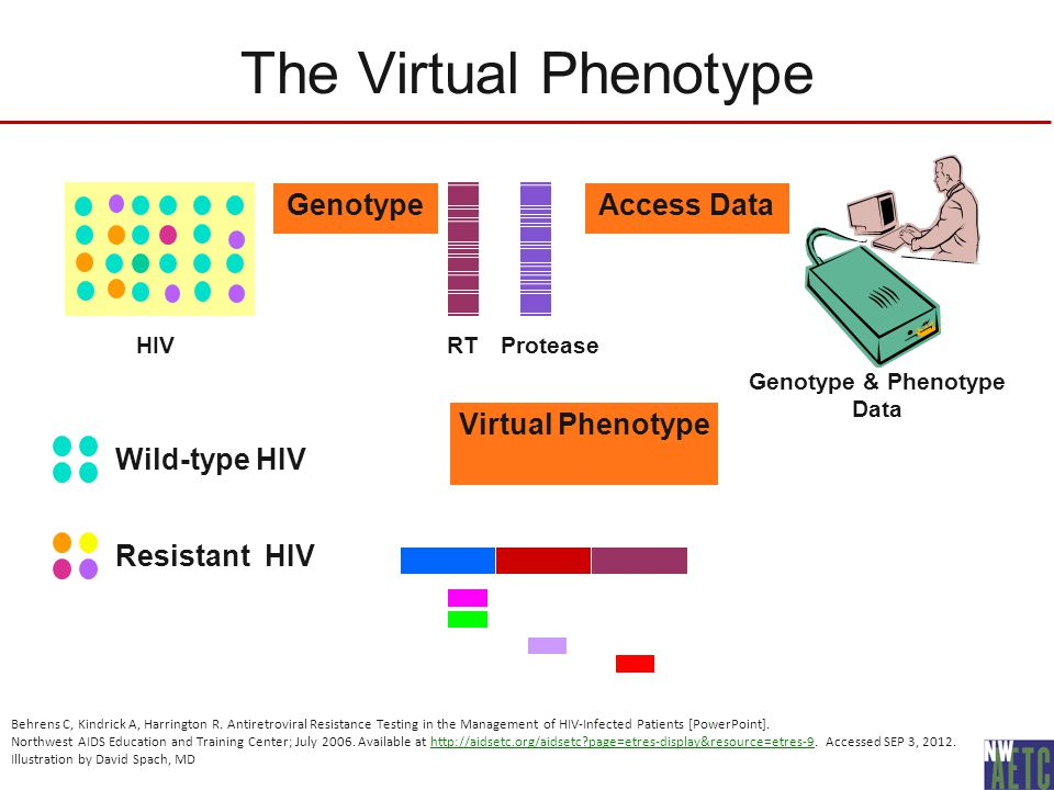 genotypes and phenotypes virtual lab Unit 1 virtual lab 3: genetics points: 30p name: cedric m swan purpose (3p)  the purpose of this  lab answers (10p) a phenotype and genotype of dragons.