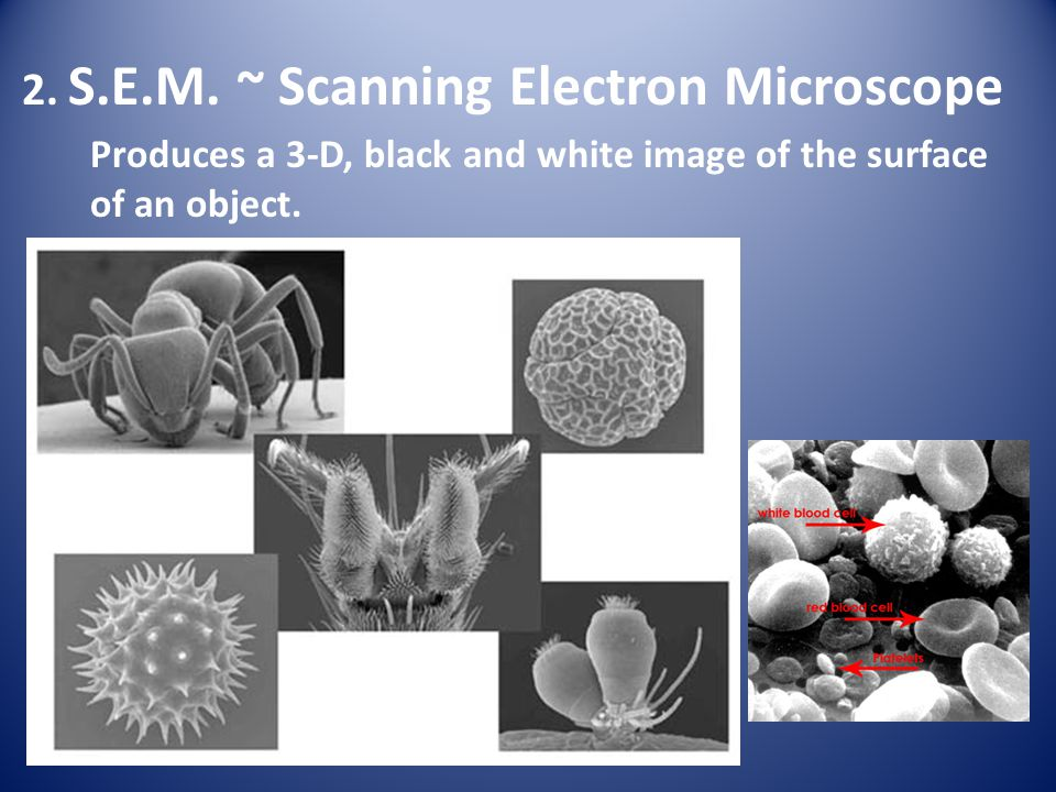 2. S.E.M. ~ Scanning Electron Microscope