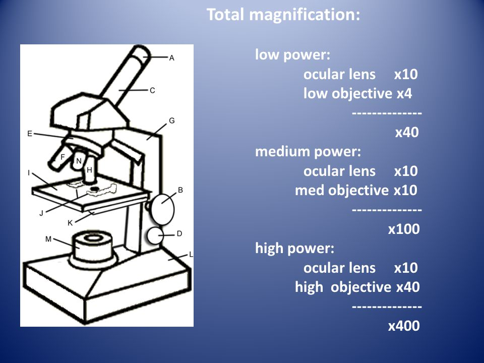 Total magnification: low power: ocular lens x10 low objective x4