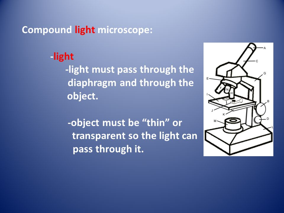 Compound light microscope: