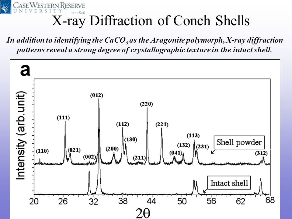 X-ray Diffraction of Conch Shells