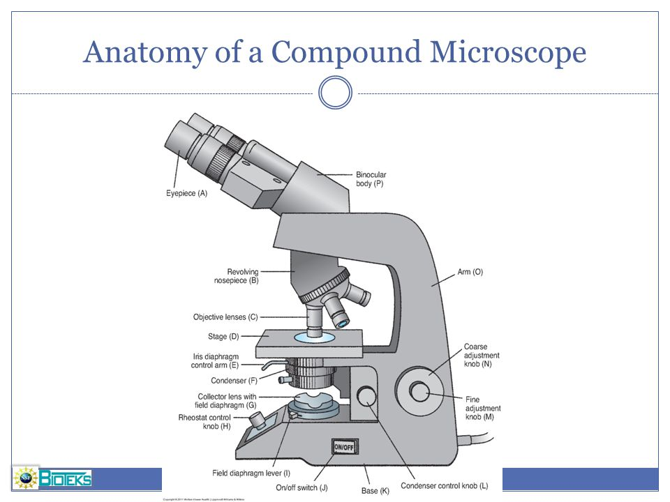 Anatomy of a Compound Microscope