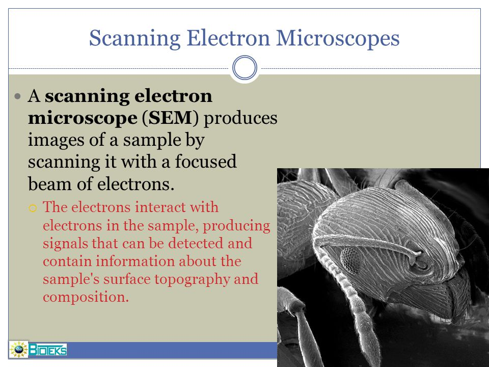 Scanning Electron Microscopes