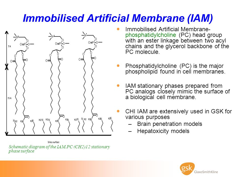 Immobilised Artificial Membrane (IAM)