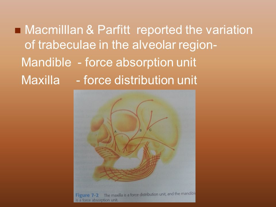 Macmilllan & Parfitt reported the variation of trabeculae in the alveolar region-