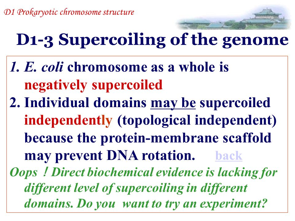 D1-3 Supercoiling of the genome