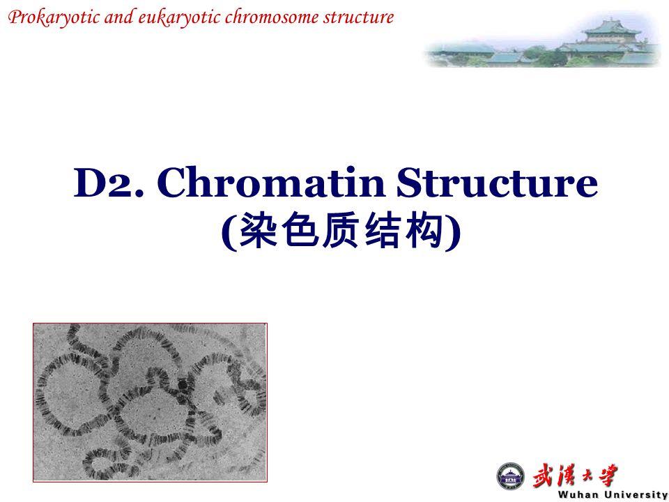 D2. Chromatin Structure (染色质结构)