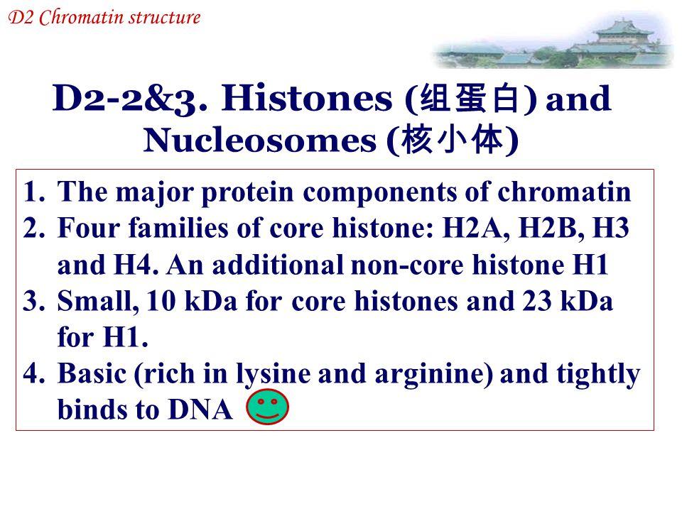 D2-2&3. Histones (组蛋白) and Nucleosomes (核小体)