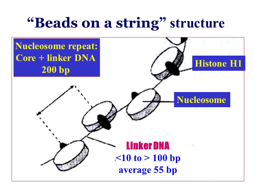 Beads on a string structure