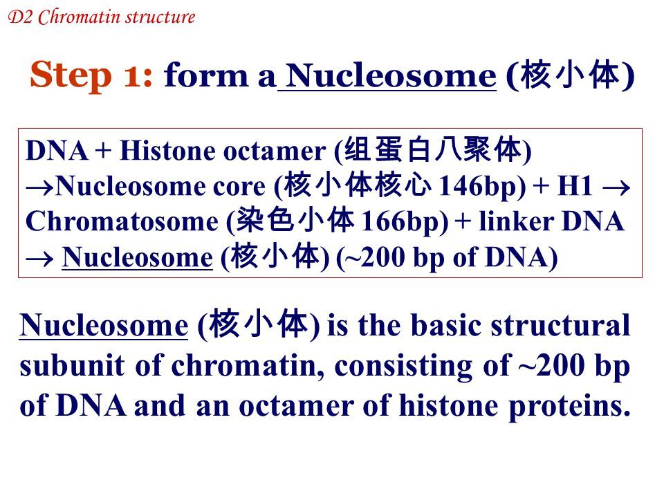 Step 1: form a Nucleosome (核小体)