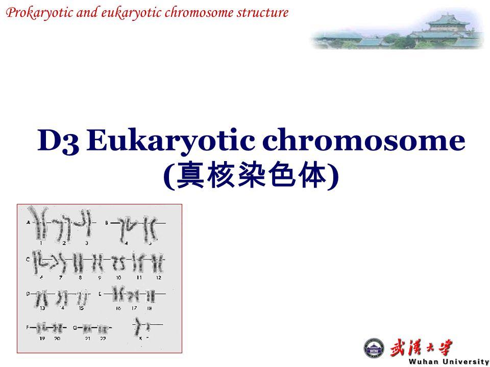 D3 Eukaryotic chromosome (真核染色体)