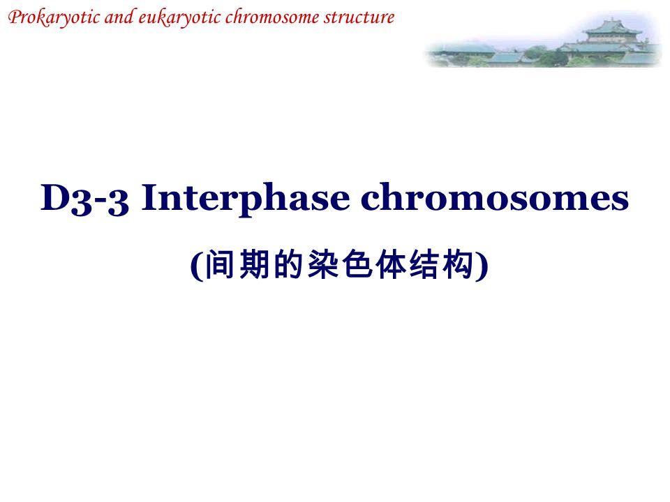 D3-3 Interphase chromosomes