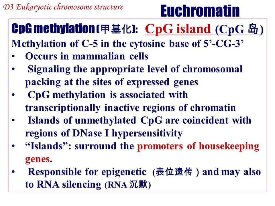 Euchromatin CpG methylation (甲基化): CpG island (CpG 岛)