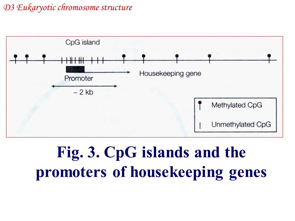 Fig. 3. CpG islands and the promoters of housekeeping genes