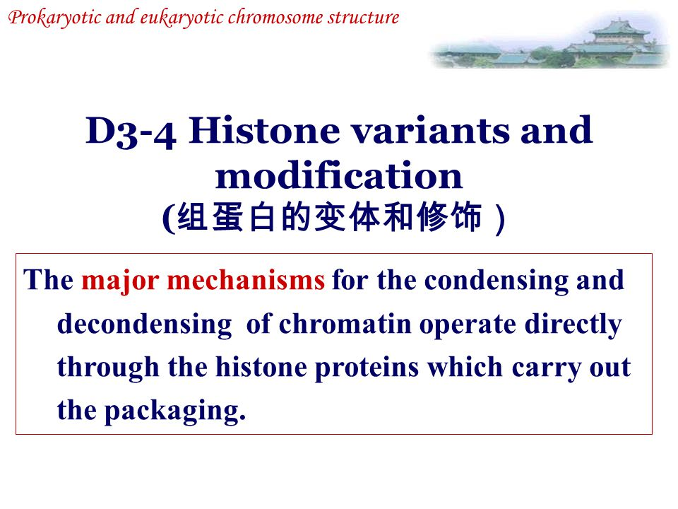 D3-4 Histone variants and modification