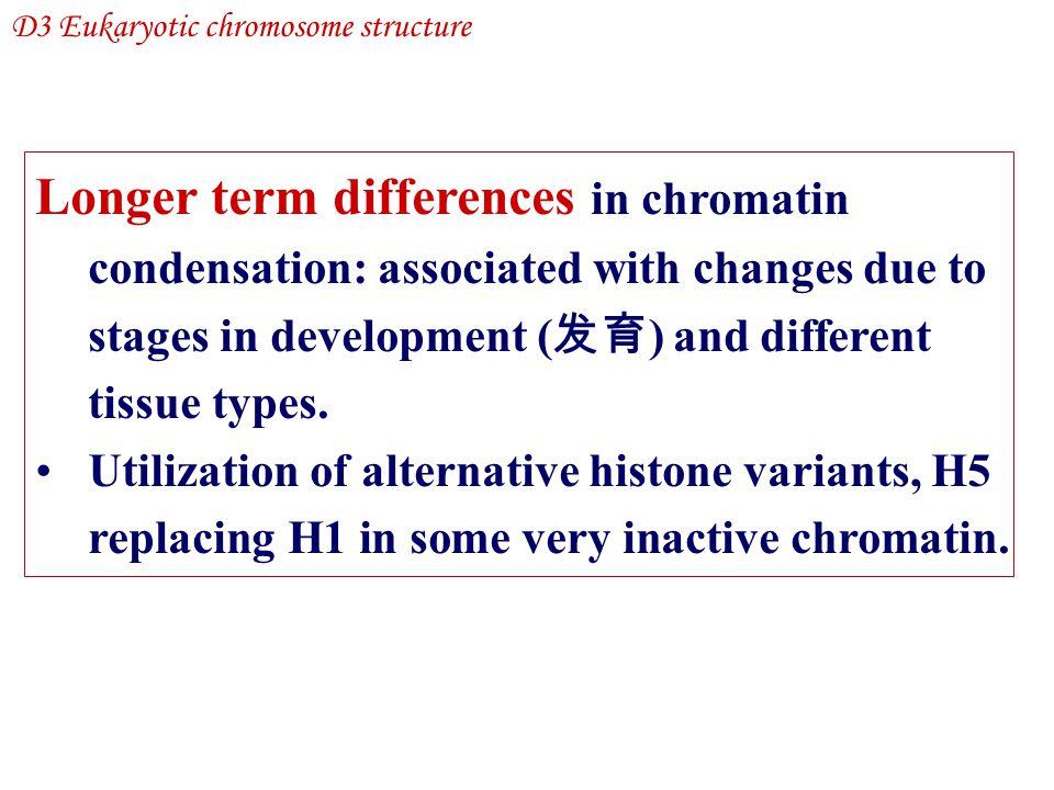 D3 Eukaryotic chromosome structure