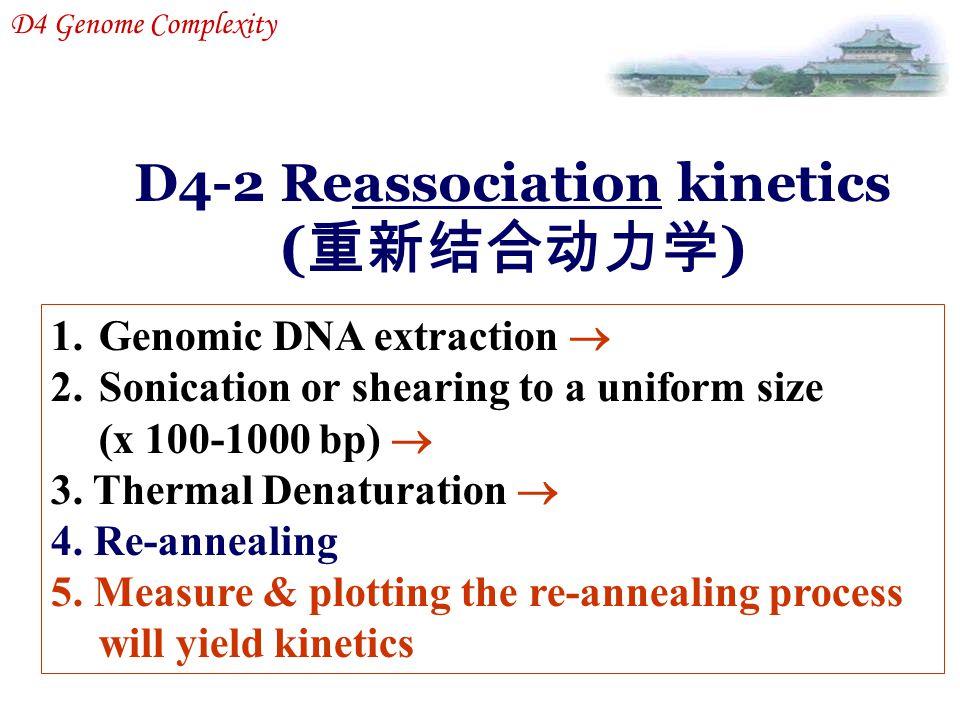 D4-2 Reassociation kinetics