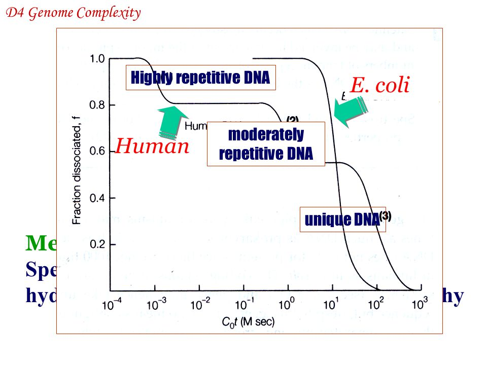 moderately repetitive DNA