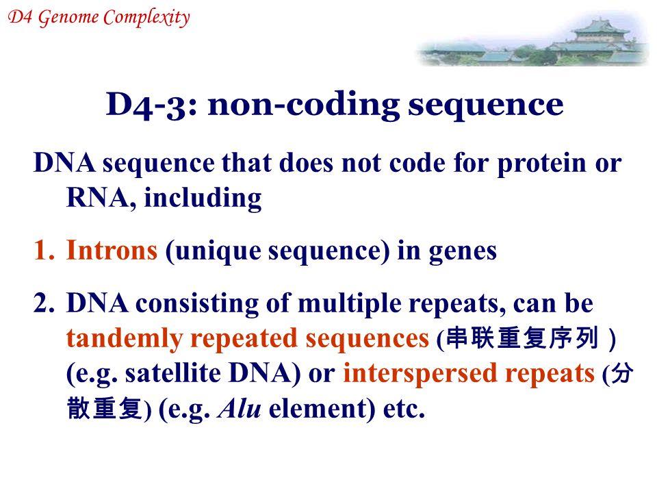 D4-3: non-coding sequence