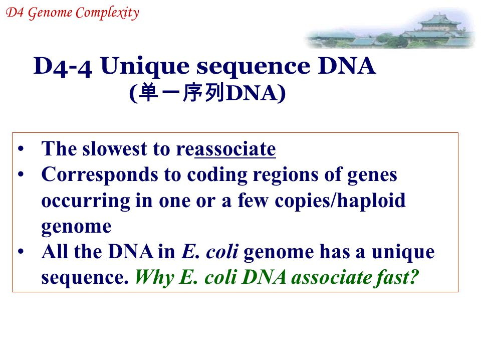 D4-4 Unique sequence DNA (单一序列DNA) The slowest to reassociate