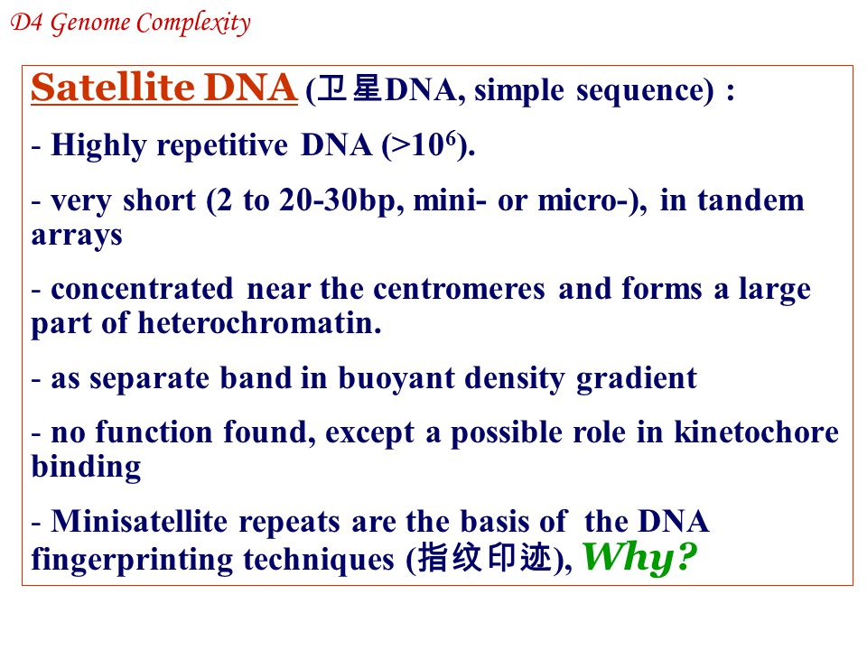 Satellite DNA (卫星DNA, simple sequence) :