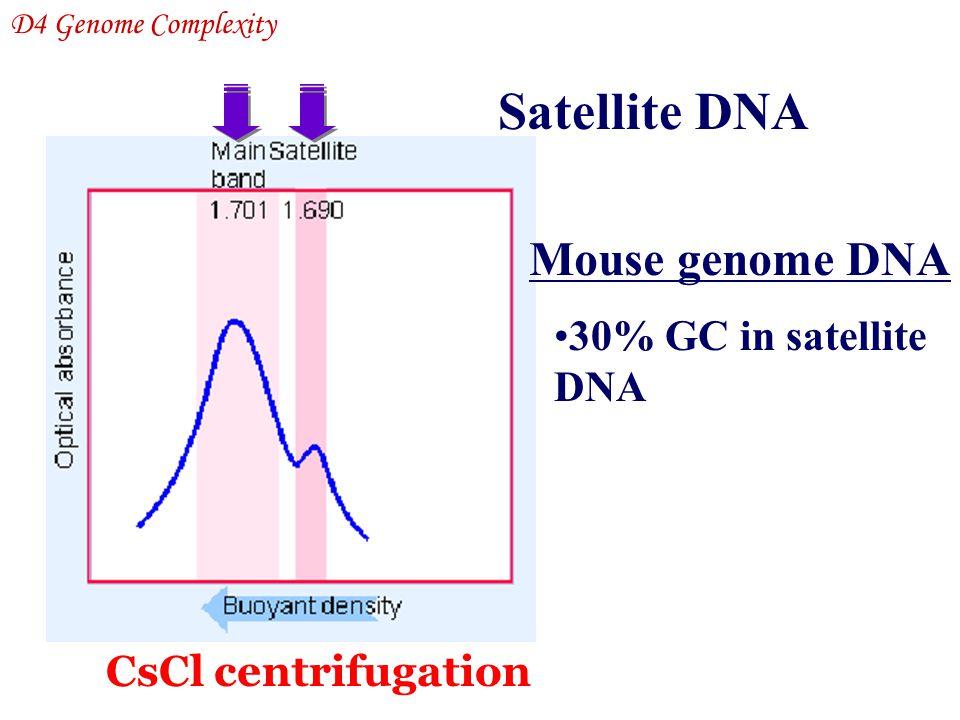 Satellite DNA Mouse genome DNA 30% GC in satellite DNA