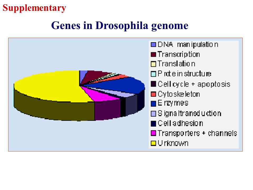 Genes in Drosophila genome