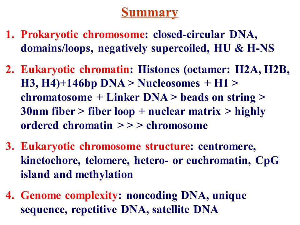 Summary Prokaryotic chromosome: closed-circular DNA, domains/loops, negatively supercoiled, HU & H-NS.