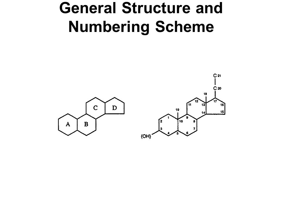 General Structure and Numbering Scheme
