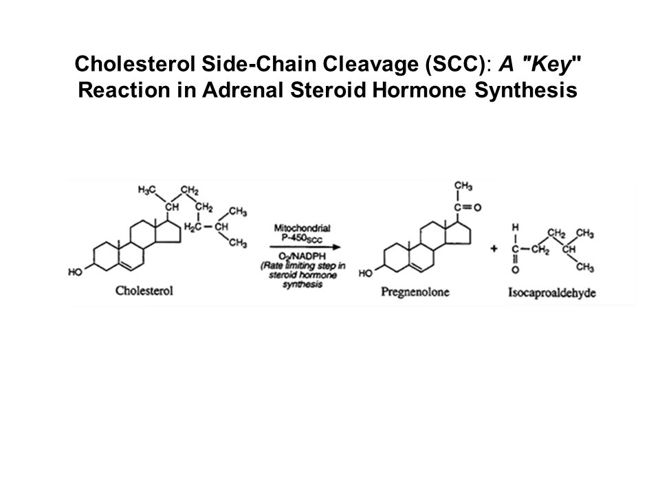 Cholesterol Side-Chain Cleavage (SCC): A Key Reaction in Adrenal Steroid Hormone Synthesis