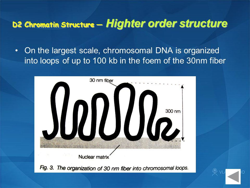 D2 Chromatin Structure — Highter order structure