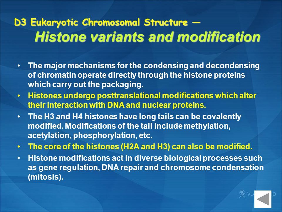 D3 Eukaryotic Chromosomal Structure — Histone variants and modification