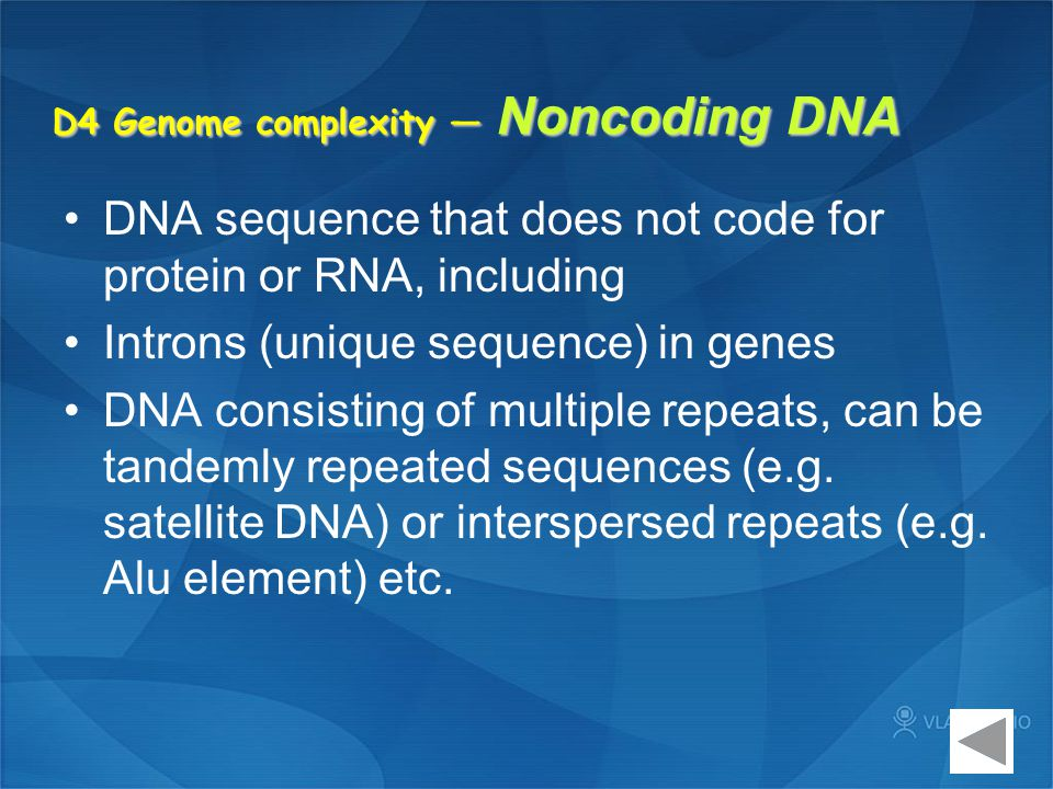 D4 Genome complexity — Noncoding DNA