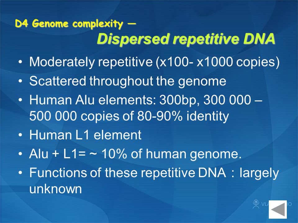 D4 Genome complexity — Dispersed repetitive DNA