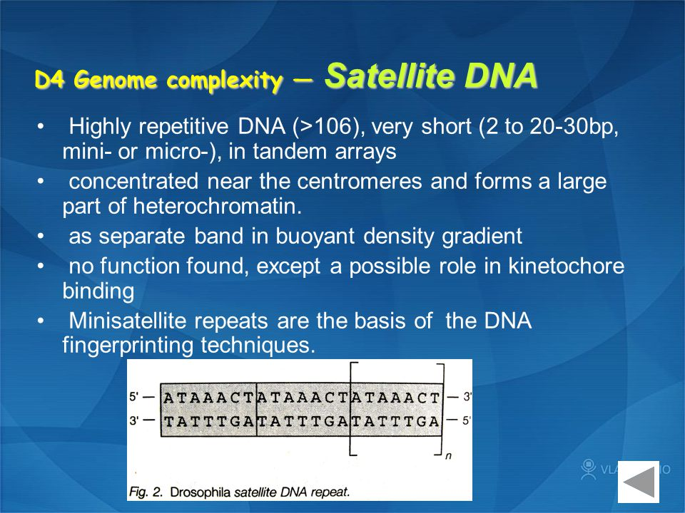 D4 Genome complexity — Satellite DNA