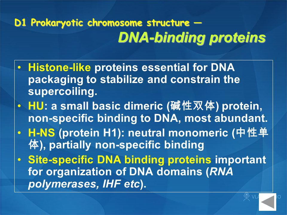 D1 Prokaryotic chromosome structure — DNA-binding proteins