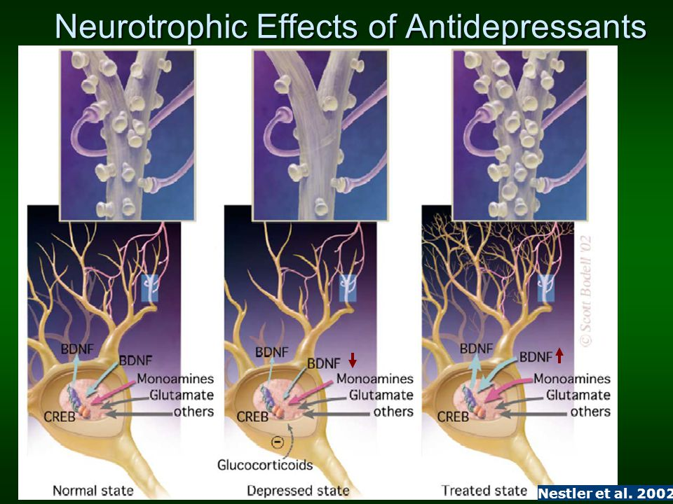 Neurotrophic Effects of Antidepressants